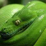 sognare serpente significato