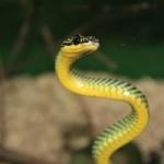 sognare serpente piccolo