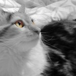 sognare accarezzare un gatto