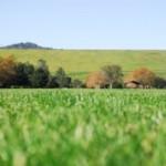 sognare erba verde