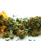 sognare marijuana