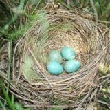 sognare nido