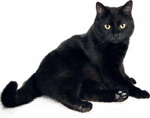 Sognare gatto nero interpretare sogni - Sognare bagno sporco ...