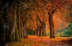 sognare bosco autunno