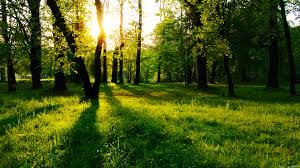 sognare bosco verde
