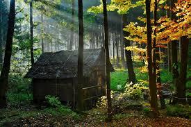 sognare casa bosco