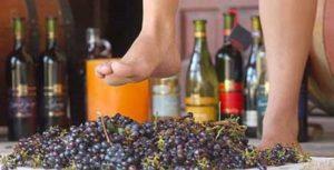 sognare pigiare uva