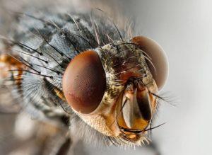sognare mosca in bocca