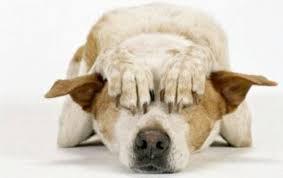 sognare picchiare cane