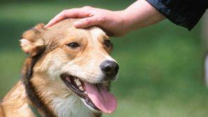 sognare accarezzare cane