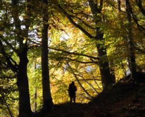 sognare camminare nel bosco