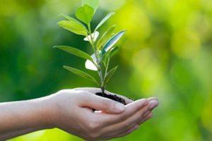 sognare curare pianta