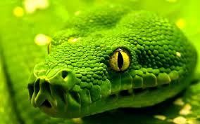 sognare serpente