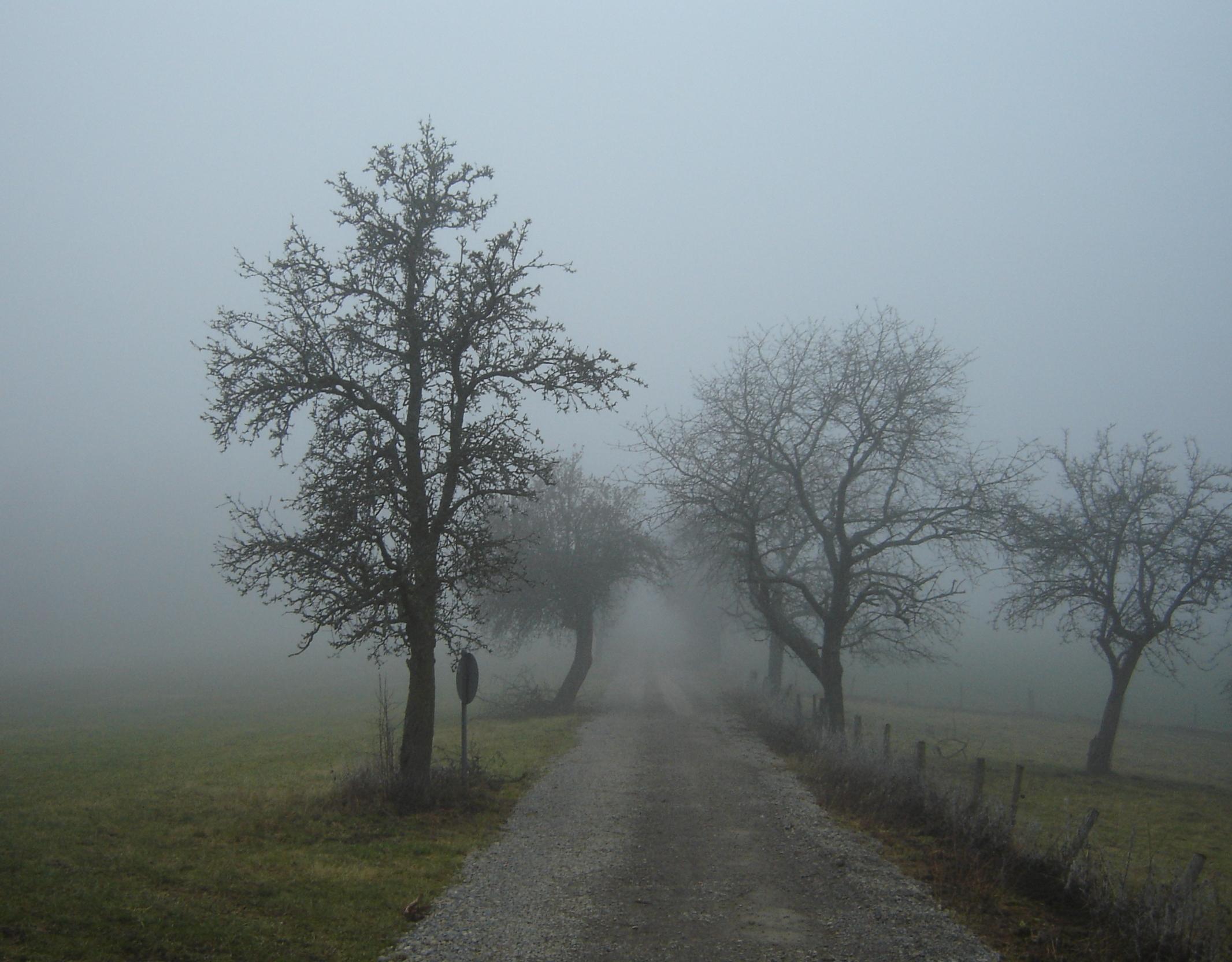 sognare nebbiav