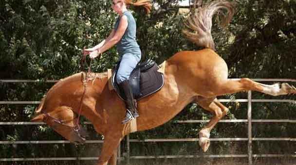 sognare cavallo agitato