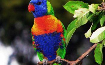 sognare accarezzare pappagallo